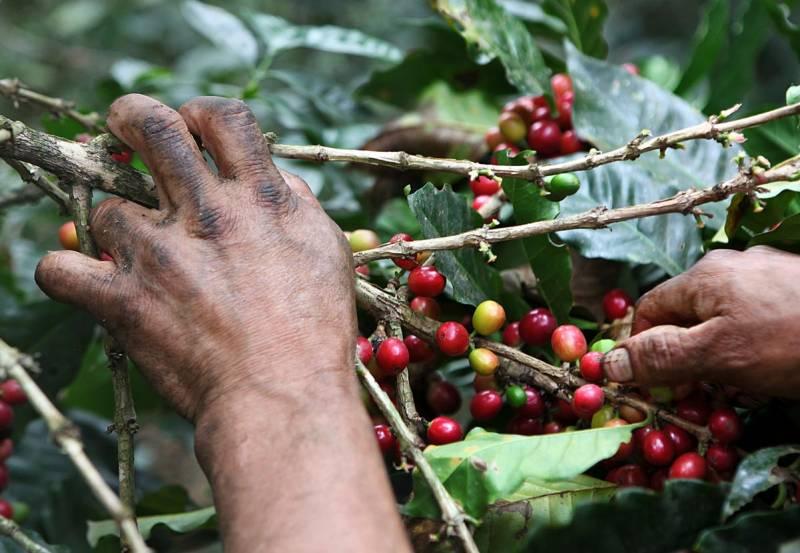¿Sabías que la actividad cafetera genera alrededor de 2 millones de empleos?